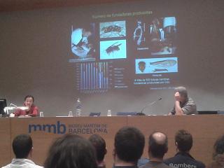 Blog Tomatissims Jornada sobre la Vespa velutina al Museu Marítim de Barcelona
